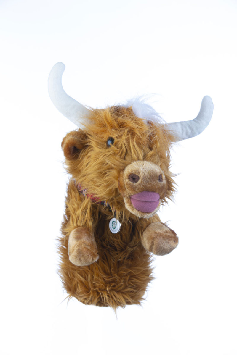 Highland Cow cover.